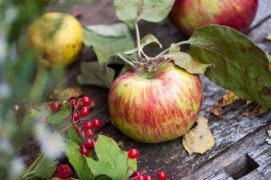 Мастер-класс по масляной живописи «Яблоки»