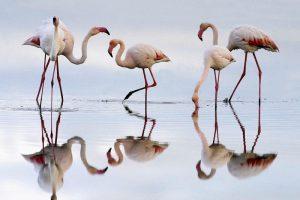 Мастер-класс по масляной живописи «Танец розовых фламинго»