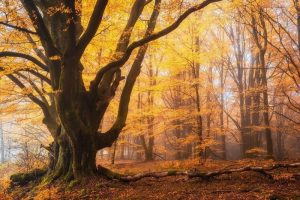 Мастер-класс по масляной живописи «Осенний лес»