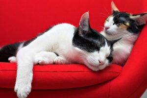 Мастер-класс по масляной живописи «Влюбленные коты»