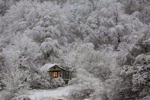 Мастер-класс по масляной живописи «Зимнее дерево»