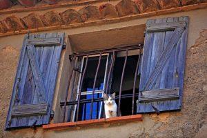Мастер-класс по масляной живописи «Кошки в окошке»