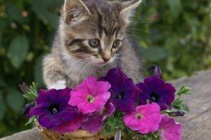 Мастер-класс по масляной живописи «Милые, пушистые котята»