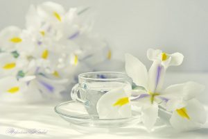 Мастер-класс по масляной живописи «Весенний натюрморт»