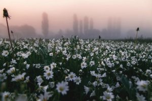 Мастер-класс по масляной живописи «Утро туманное»