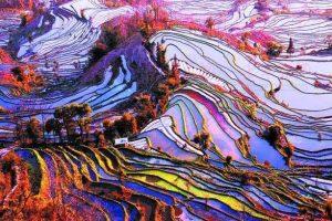 Мастер-класс по масляной живописи «Нереальная реальность. Рисовые поля в Китае»