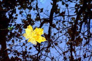 Мастер-класс по масляной живописи «Осень»