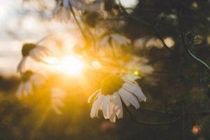 Мастер-класс по масляной живописи «Солнечное настроение»